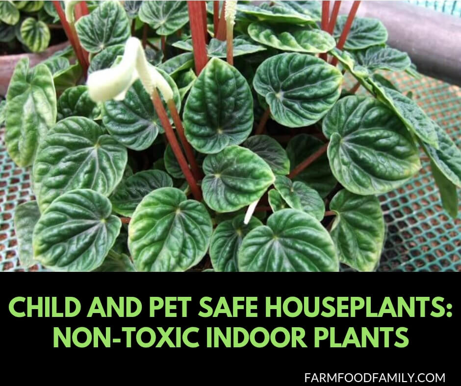 Non toxic indoor plants: child and pet safe houseplants
