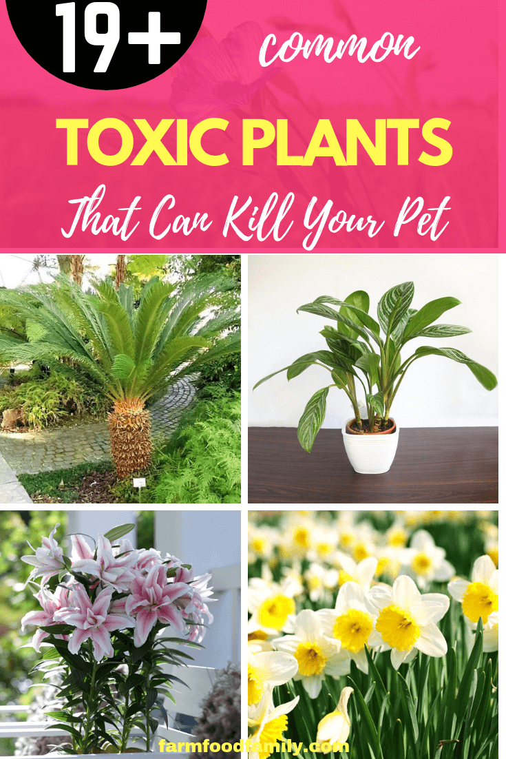 Toxic Flowers That Can Kill Your Pet: Plants that are Poisonous to Dogs and Cats