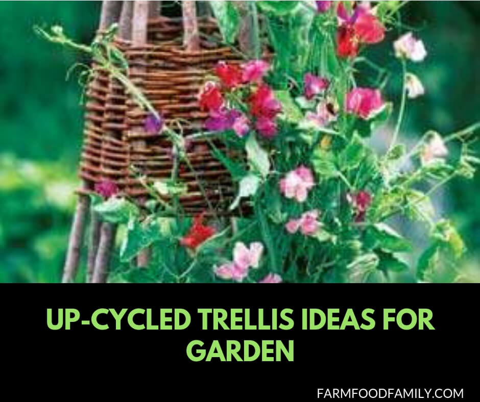 27 Up-cycled trellis ideas for your garden