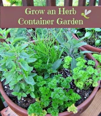 Build an herb container | Flower Garden Ideas for Containers and Windowboxes