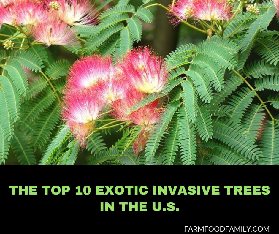 Best Exotic Invasive Trees in the US.