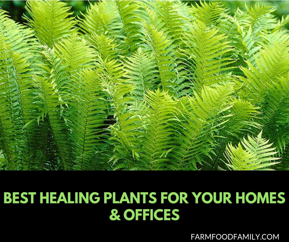 Best Healing Houseplants