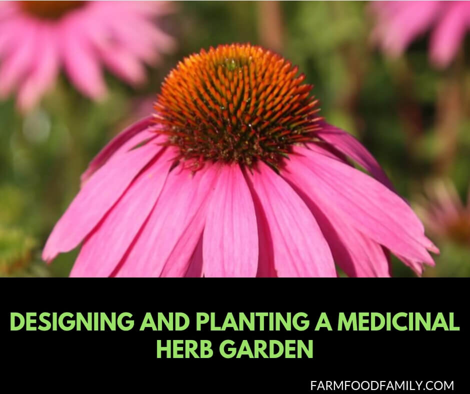 How to Grow Healing Herbs for Health and Wellbeing