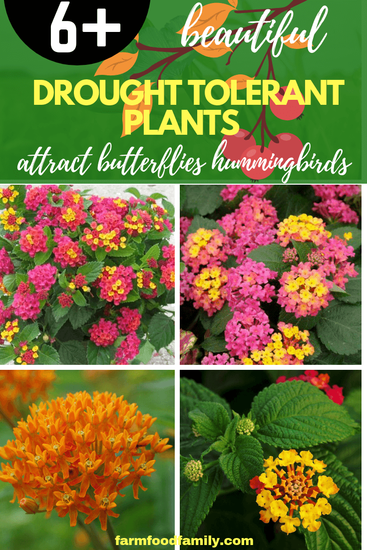 Drought Tolerant Plants Attracting Pollinators: Try Xeriscape Gardening and Attract Bees Butterflies Hummingbirds