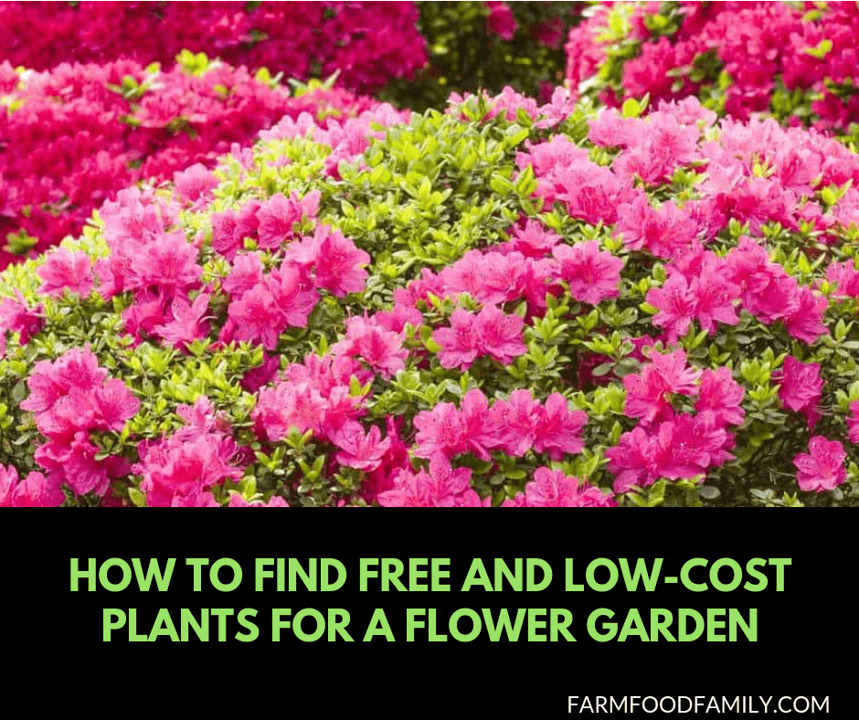 How to find free and low cost plants for a flower garden