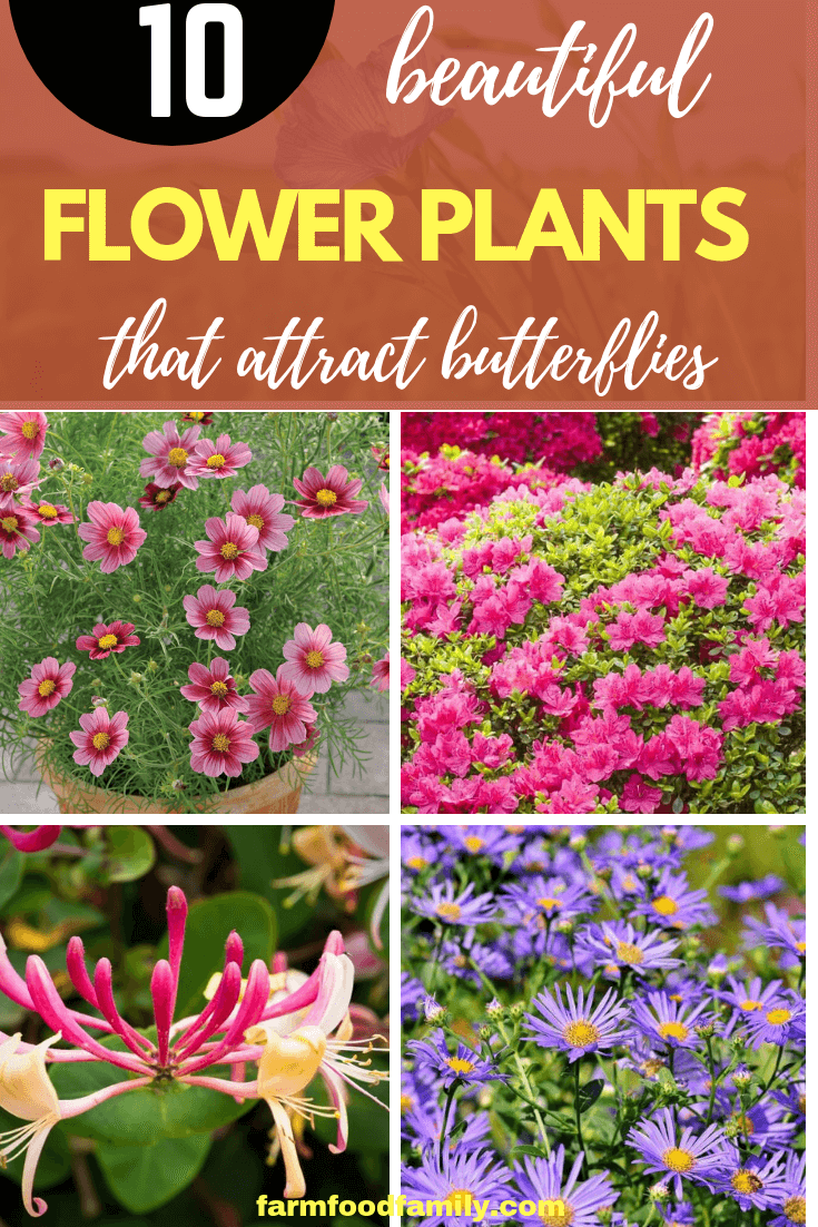 How to Attract Butterflies to Your Garden with Flowers and Herbs