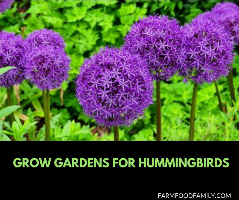 Grow gardens for Hummingbirds
