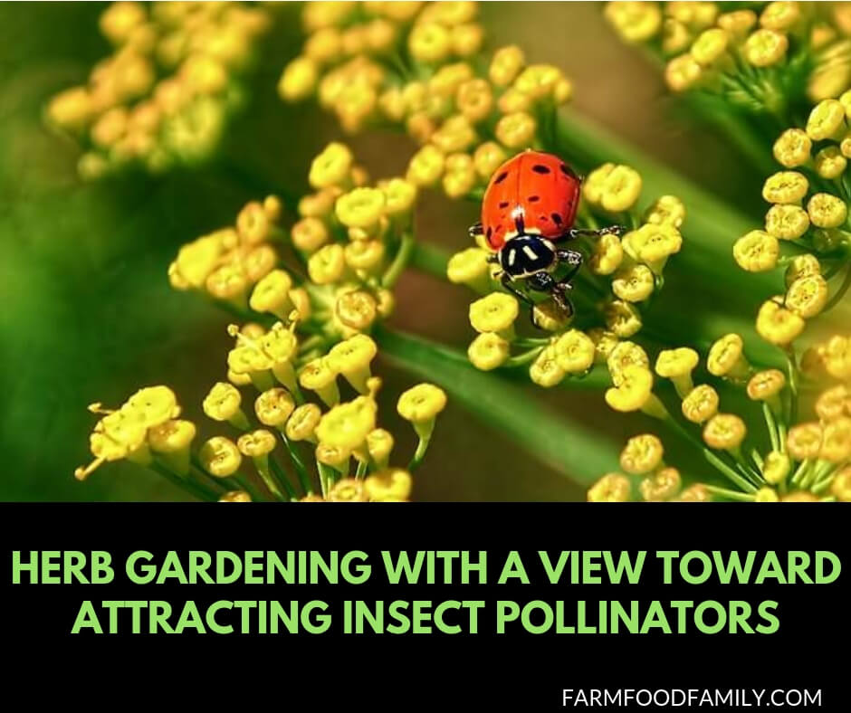 An Herb Butterfly And Bee Garden: Herb Gardening with a View Toward Attracting Insect Pollinators