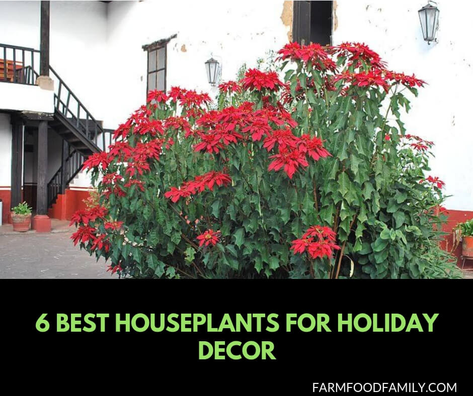6 Houseplants for Holiday decor