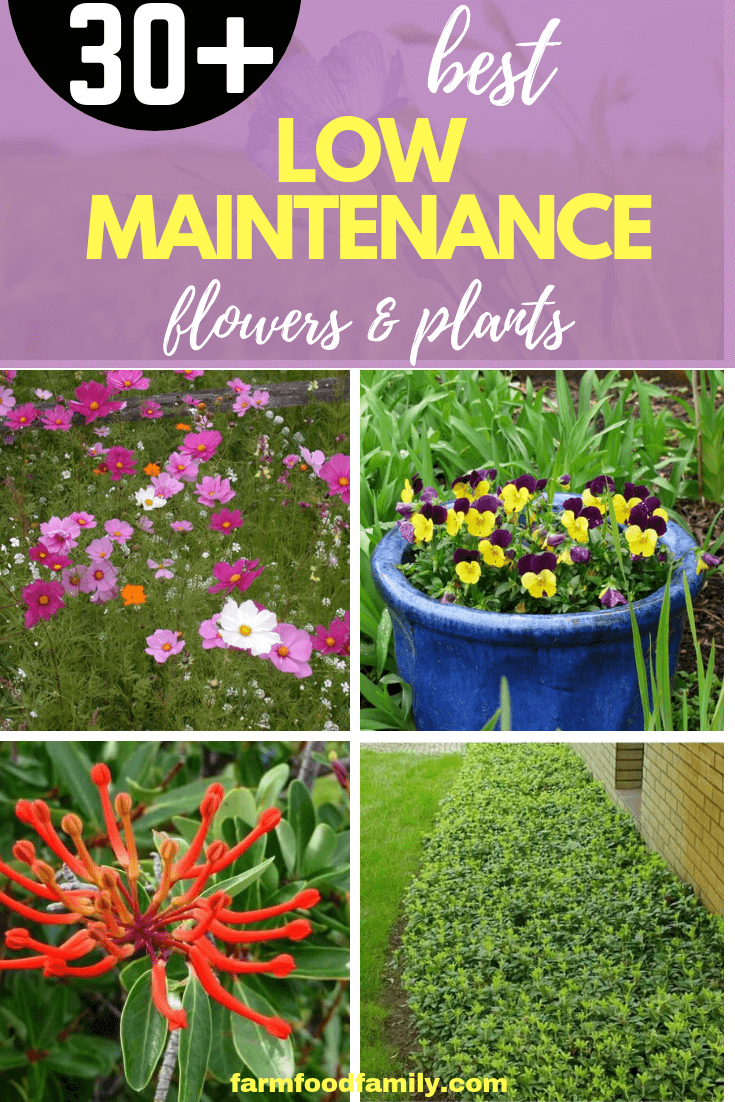 30+ Low-maintenance flowers and plants