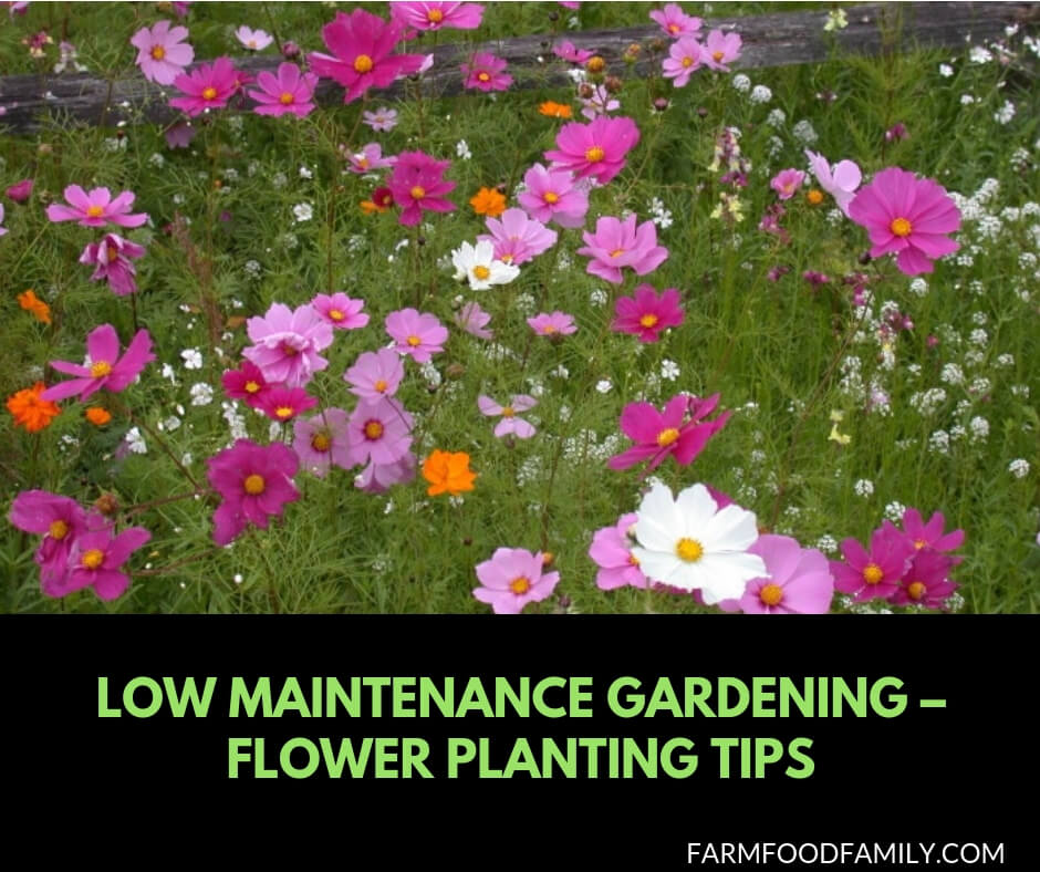 Low maintenance gardening tips