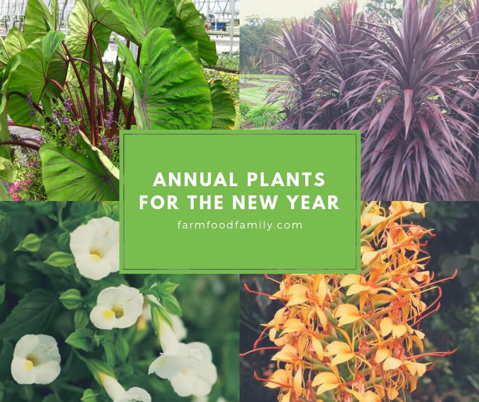 Annual Plants for the New Year