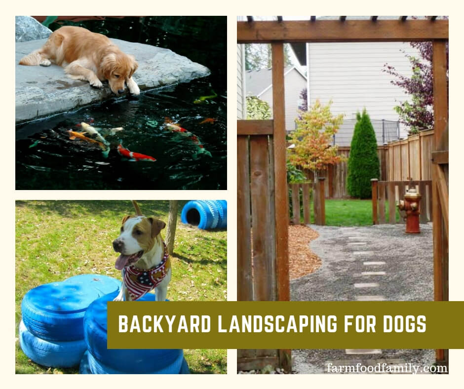 Dog friendly landscaping ideas
