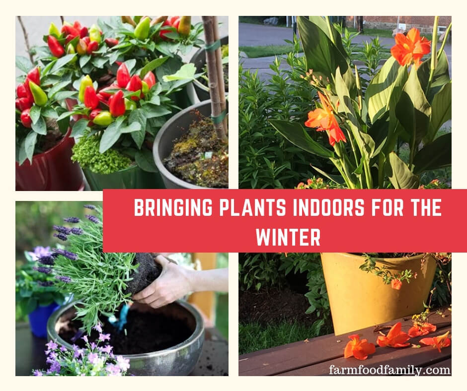 Bringing Plants Indoors for the Winter