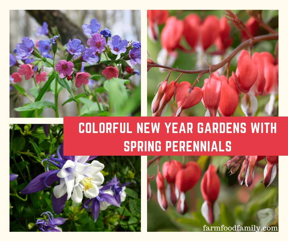 Favorite Spring Blooming Perennials for Abundant Garden Flowers