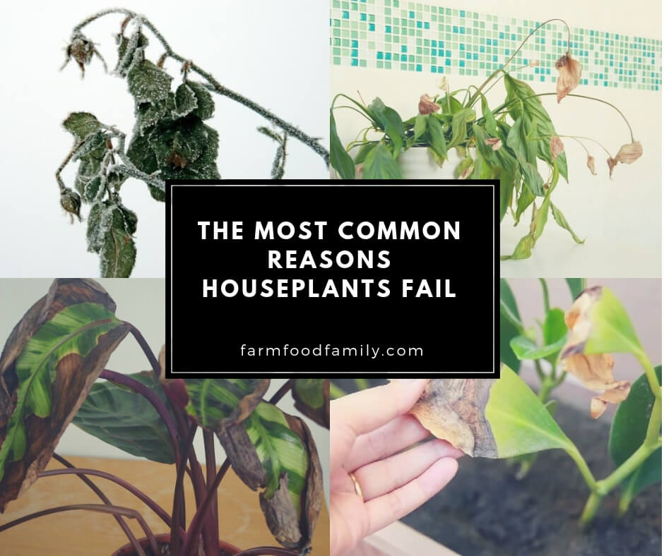 Understanding Plant Death: The Most Common Reasons Houseplants Fail