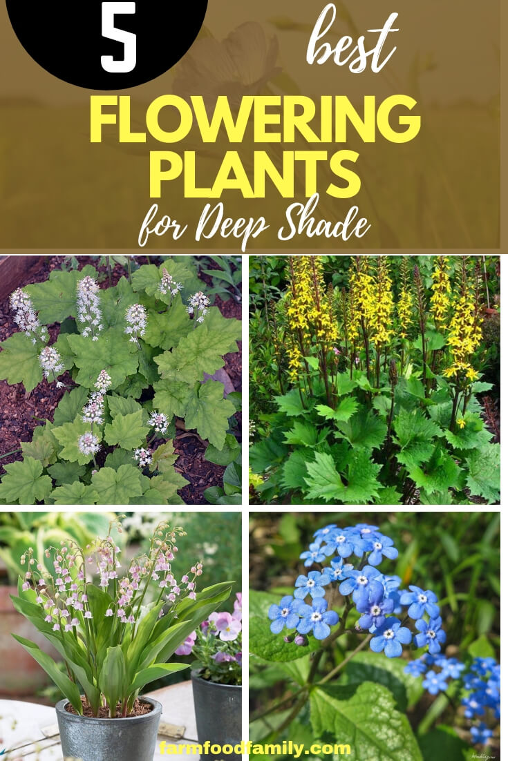 Flower plants for deep shade