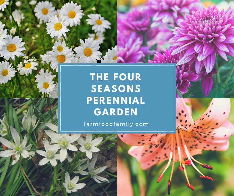 A simple How-To tutorial on creating a beautiful perennial garden that is gorgeous in every season!