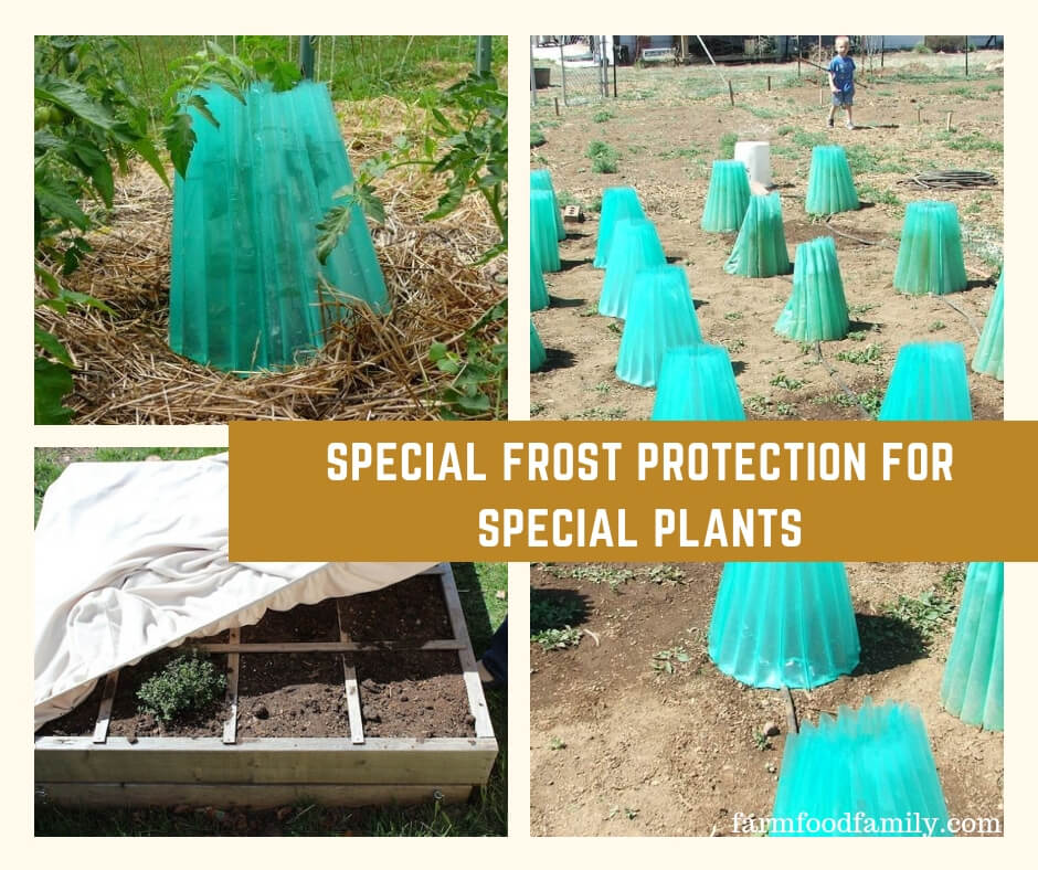 Special Frost Protection for Special Plants