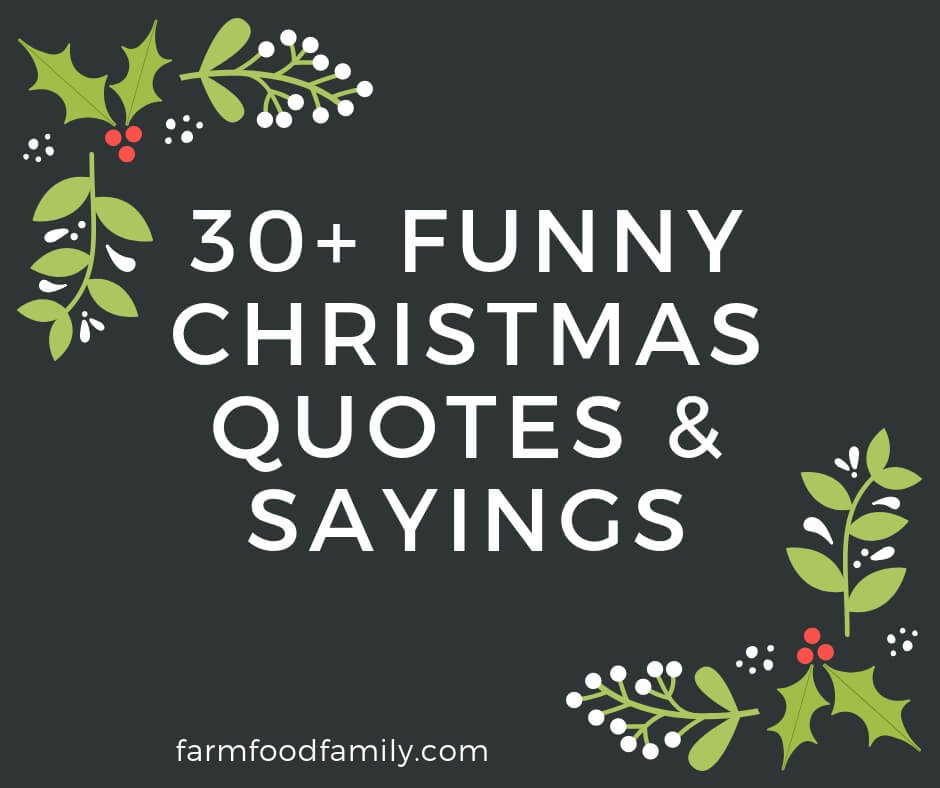 30+ Funny Christmas Quotes & Sayings That Make You Laugh