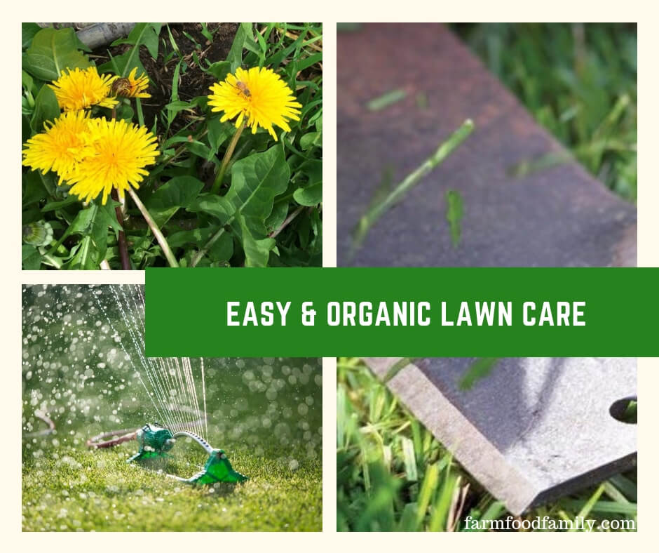 Easy & Organic Lawn Care