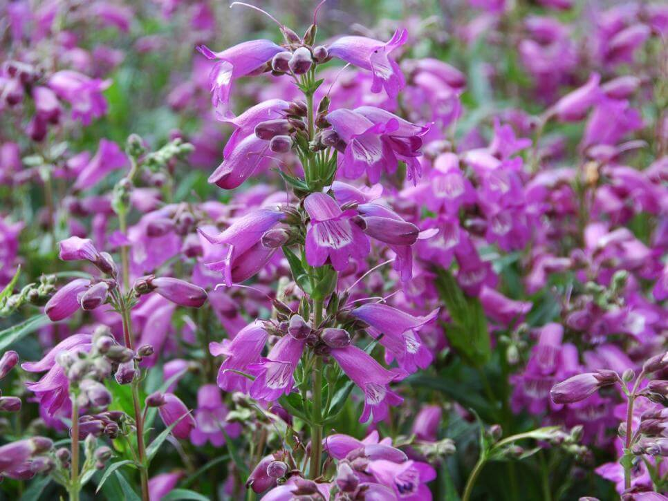 Plants that bloom in summer