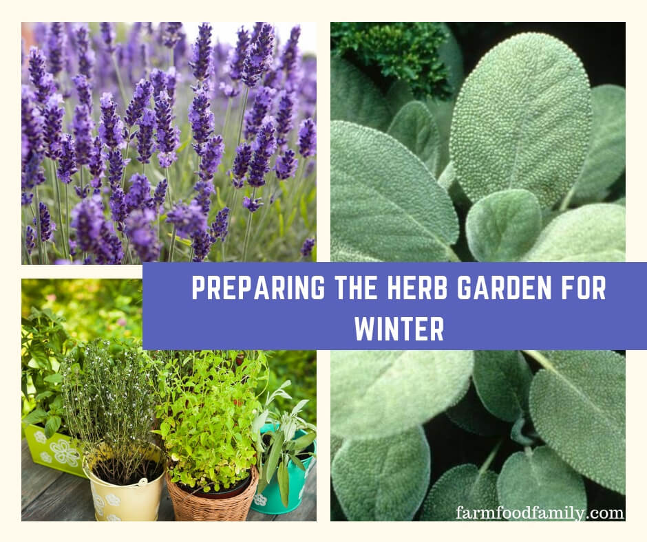 Preparing the herb garden for winter farm food family - How to prepare garden for winter ...