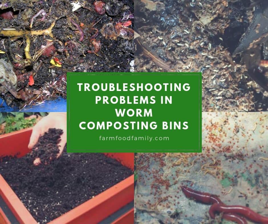 Worm Composting Troubleshooting Problems In