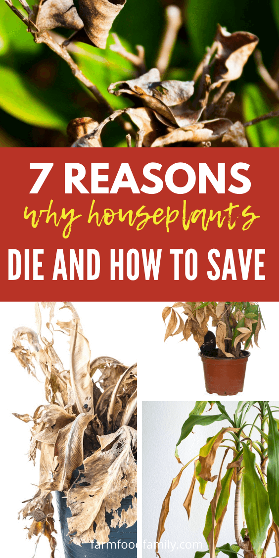 7 common reasons your houseplants die and how to save them