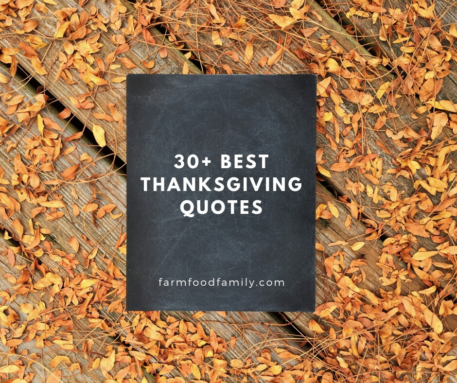 Best thanksgiving quotes for friends and family