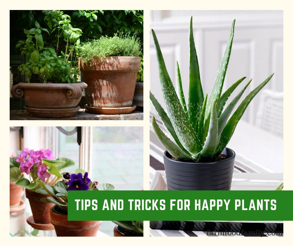 Tips and Tricks for Happy Plants