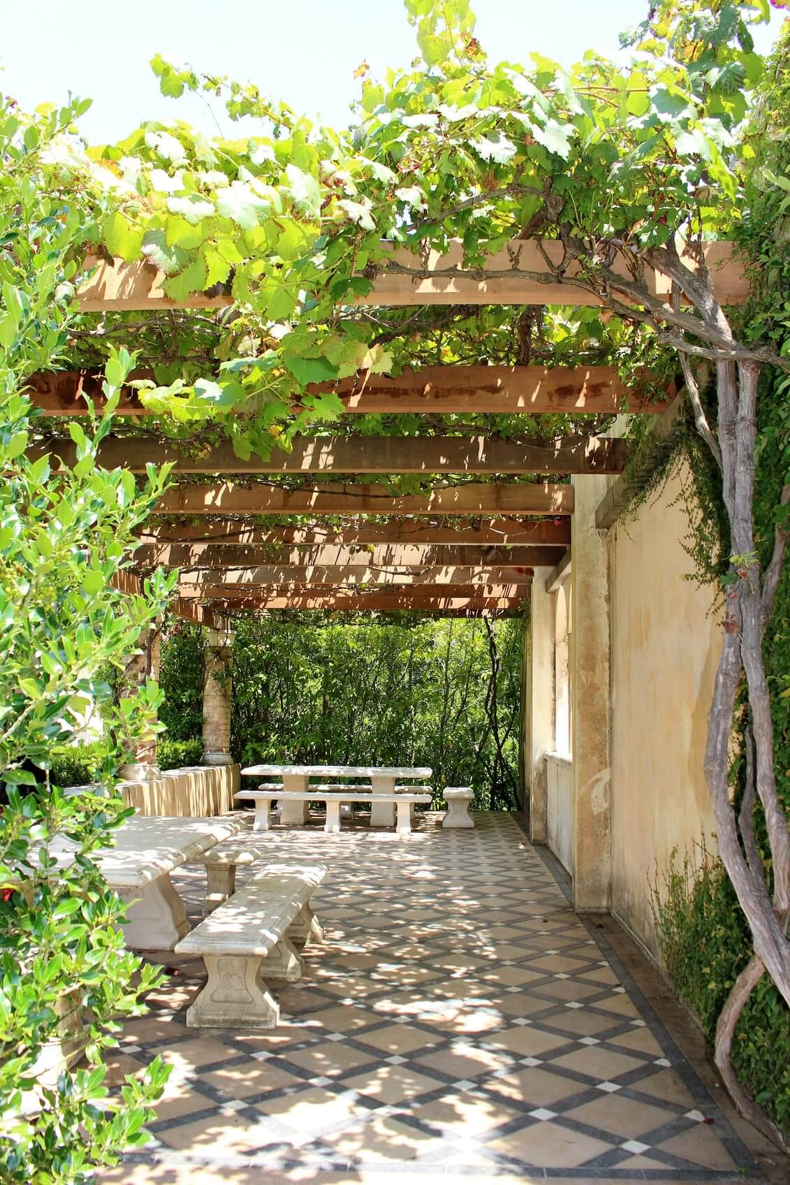 Vines to Create Shade in the Garden