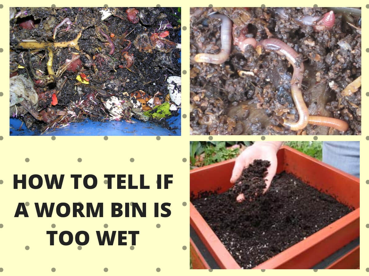 How to Tell if a Worm Bin is Too Wet