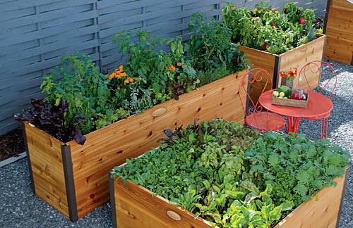 Elevated Raised Beds