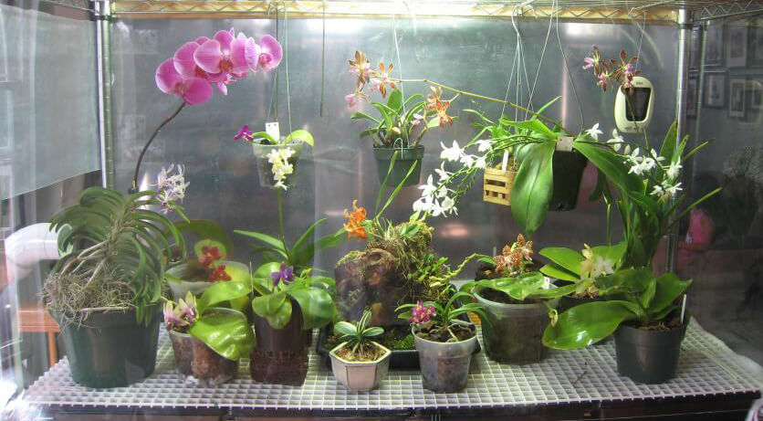 Too Much Light for Orchids