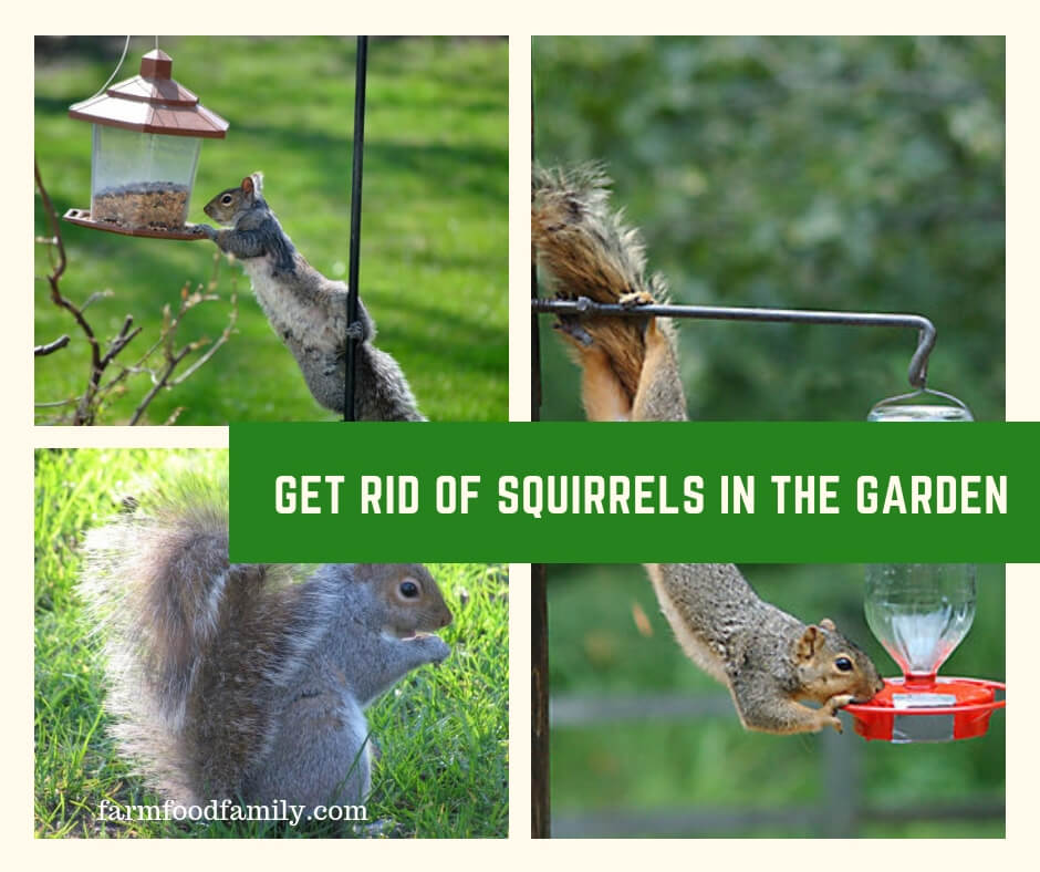 Get Rid of Squirrels in the Garden