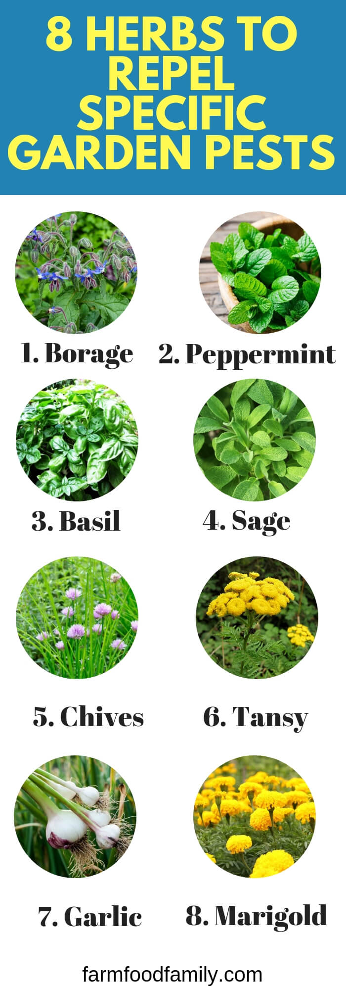 Herbs to Plant to Repel Specific Garden Pests