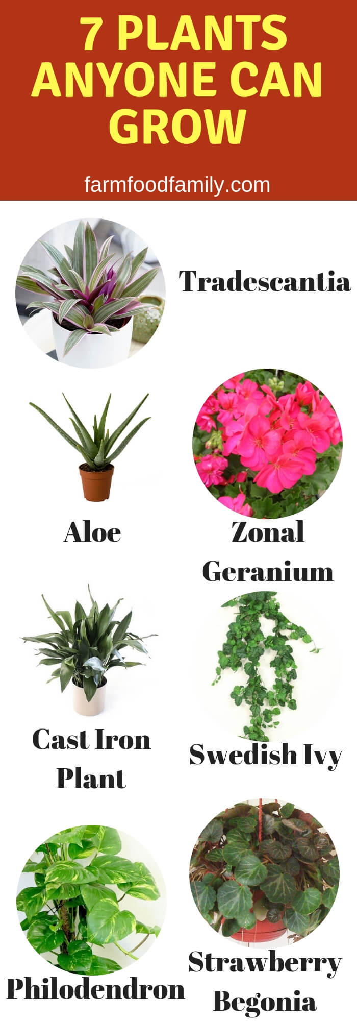 Infographic 7 Plants Anyone Can Grow