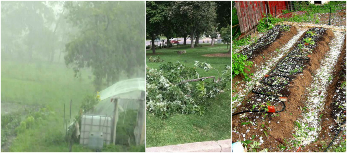 How to Protect Gardens from Damage