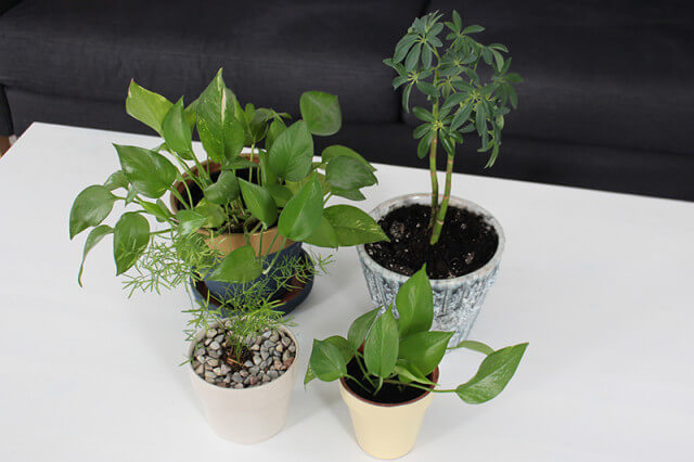 Spring cleaning houseplants