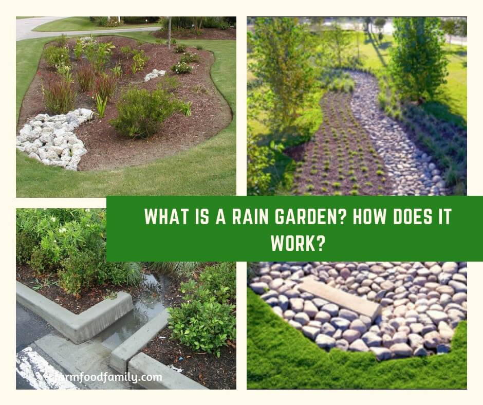 What is a Rain Garden? How Does it Work?