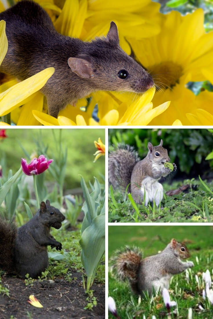 Protect Plants from Rodent Damage