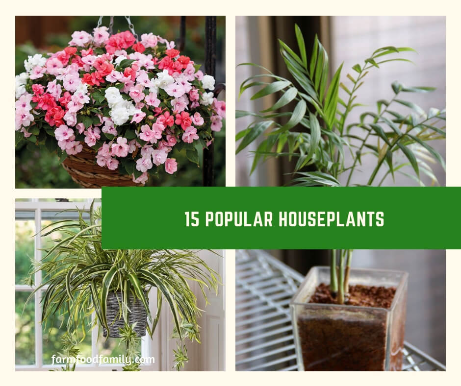 House plants are varied and very broad. Most can be categorized as flowering and non flowering. While we commonly assume house plants are few in numbers, the truth is there are hundreds of varieties of house plants.