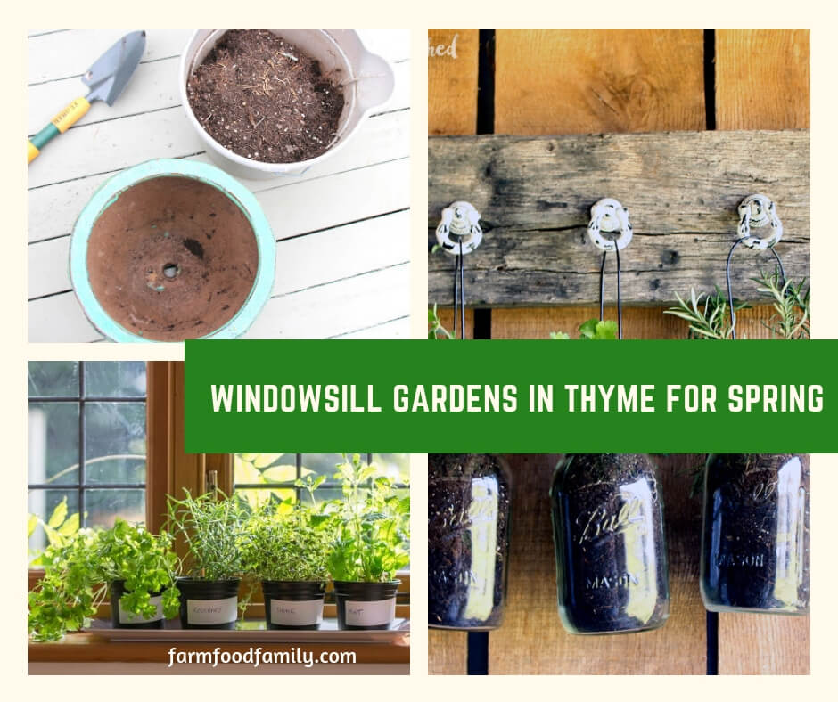 Windowsill Gardens in Thyme for Spring