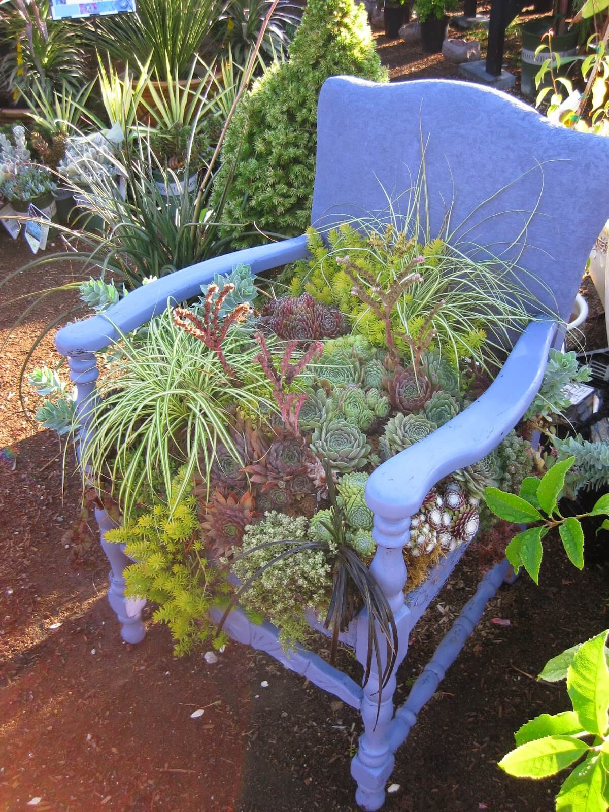 Succulent Chair planter   Creative Upcycled DIY Chair Planter Ideas For Your Garden