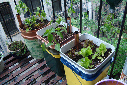Self-Watering Containers | Best DIY Self-Watering System Ideas