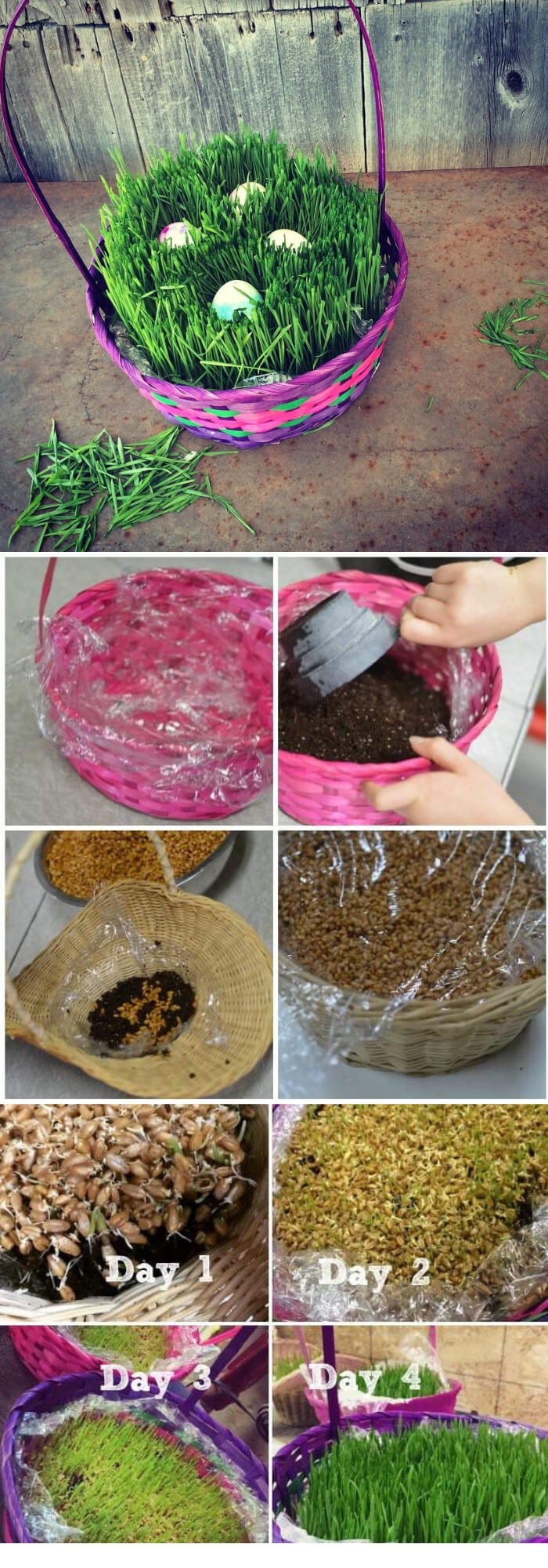Grow Your Own Easter Basket Grass   Creative Easter Garden Projects & Ideas Your Kids Will Love
