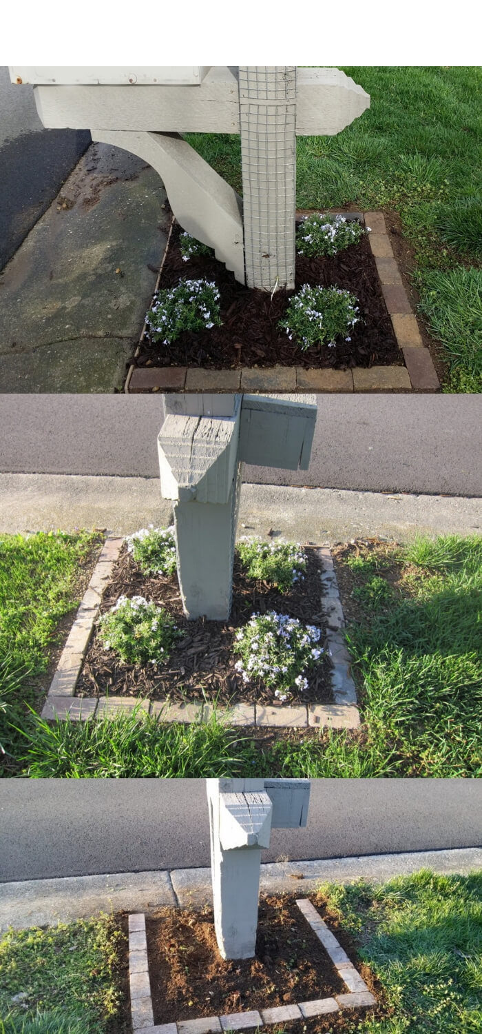 Mailbox with landscaping, creeping phlox and clematis | Best Mailbox Landscaping Ideas