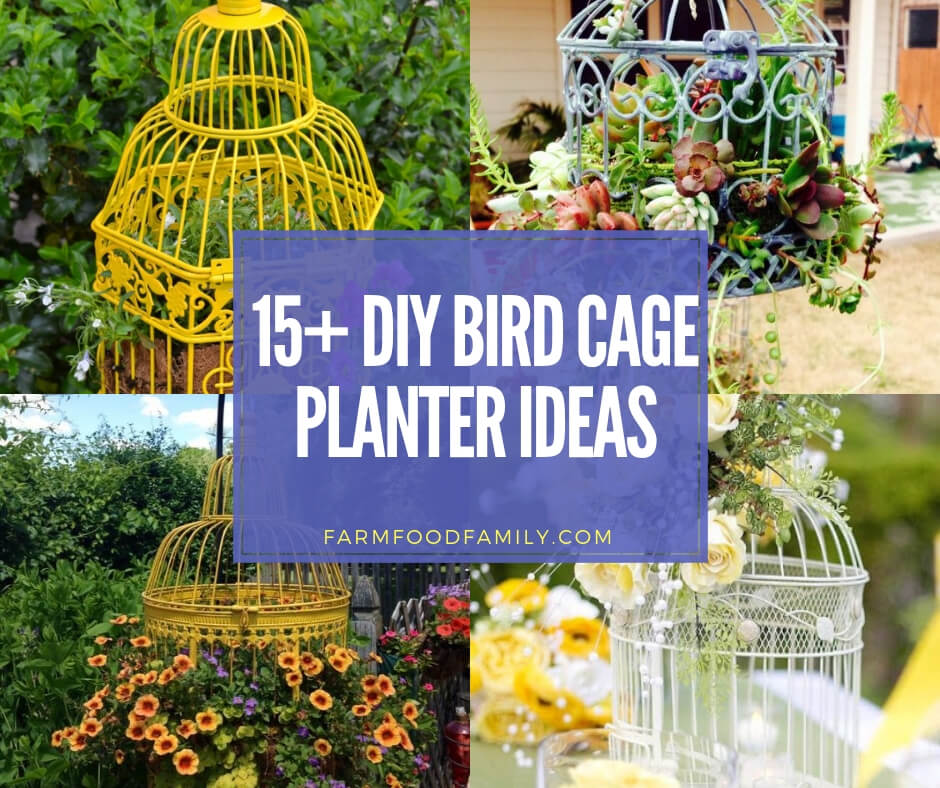 Best DIY Bird Cage Planter Ideas