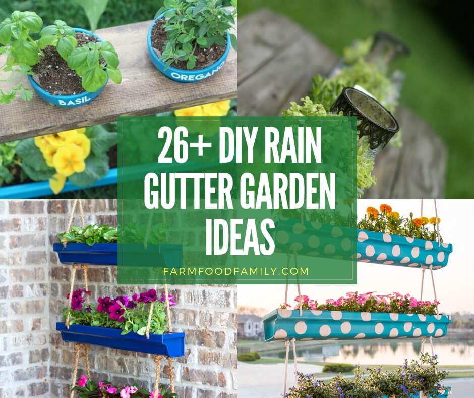 Best rain gutter garden ideas